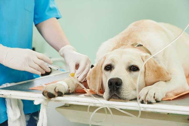 Анестезия для собак в клинике АВЕТ
