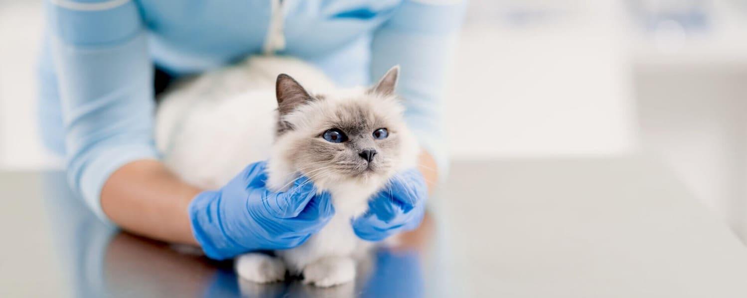 Лечение болезней хвоста у кошек а Киеве