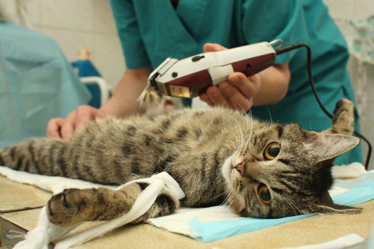 Лечение укушенных ран у домашних животных