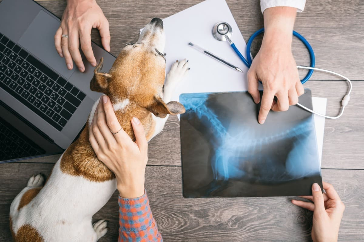 О цифровом рентгене в ветклинике АВЕТ