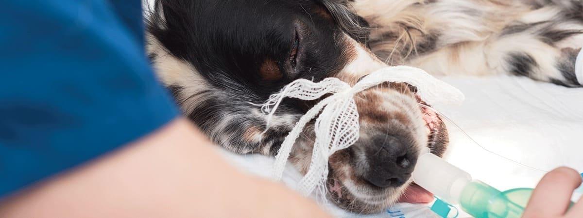 Анестезия животным в клинике АВЕТ