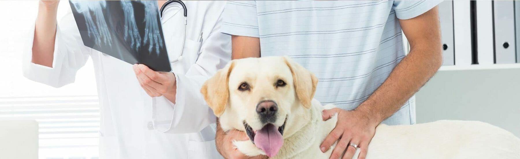 Рентген для животных в Киеве по доступной цене